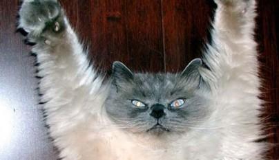 gatos graciosos9