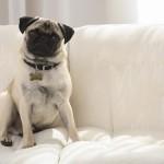Causas del mal olor en perros