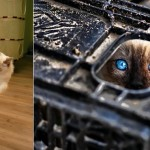 Fotos de gatos que parecen ninjas