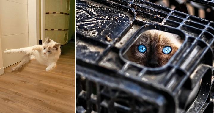 ninjas gatos