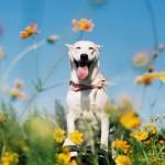 Gluta, una feliz perra que fue rescatada y superó un cáncer