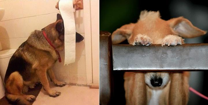 perros escondiendose1