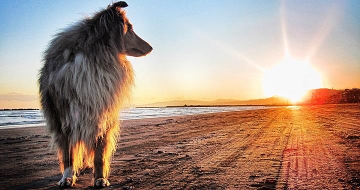 perros sol