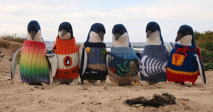 Jerseis pinguinos