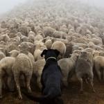 Bonitas fotos de perros trabajadores