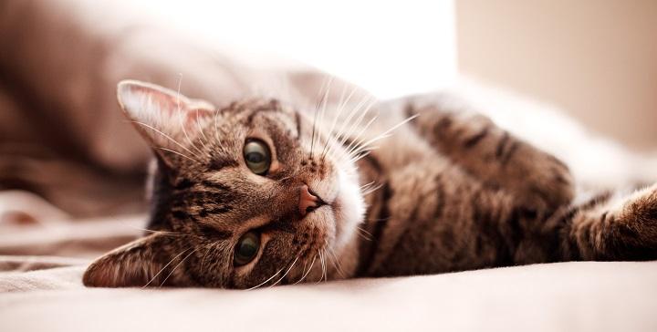 casa perfecta gatos1