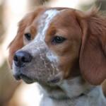Diferencias entre perros y perras