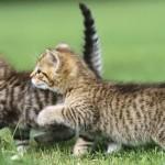 Por qué tener dos o más gatos en lugar de uno