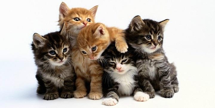 dos o mas gatos1