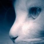 La hipotermia en gatos