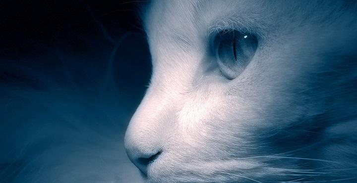 hipotermia gatos