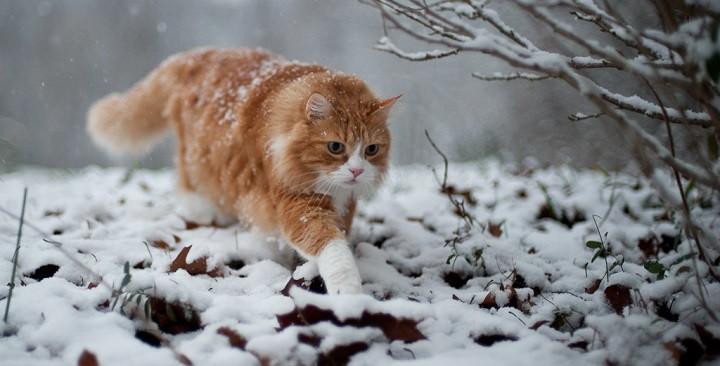 hipotermia gatos1