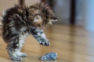 Juguetes estimulantes para que los gatos jueguen solos