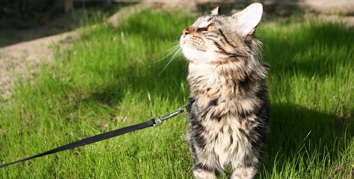 pasear gatos1