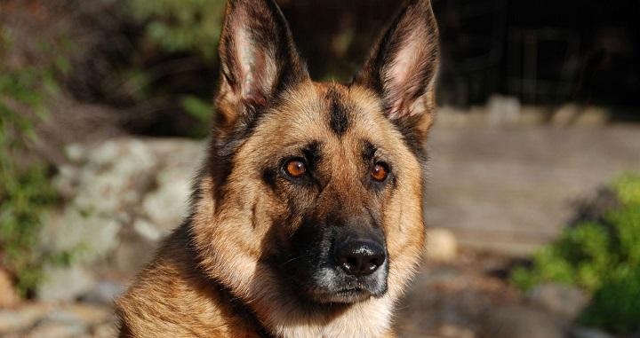 perro Marron 5