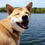 ¿Cuidas la sonrisa de tu perro?
