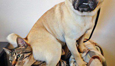 perros travesuras9