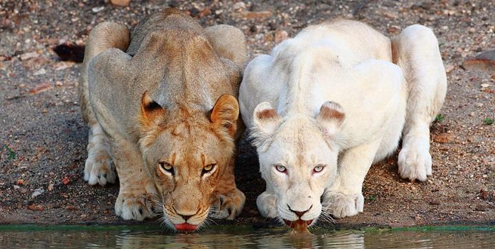 Animales albinos fotos1