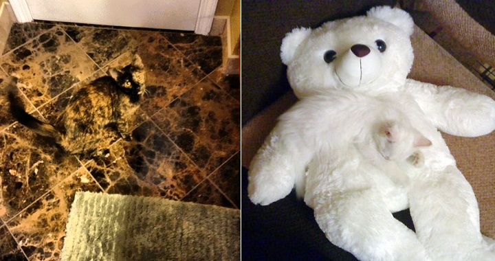 Gatos camuflados fotos