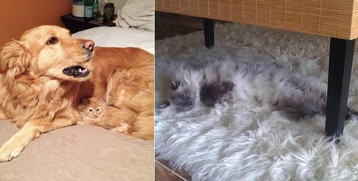 Gatos camuflados fotos1