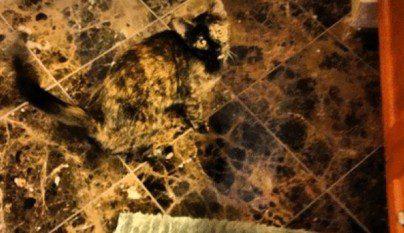 Gatos camuflados1