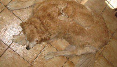 Gatos camuflados10