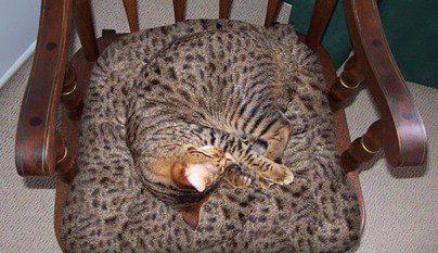 Gatos camuflados11