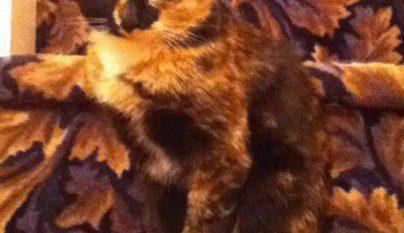 Gatos camuflados12