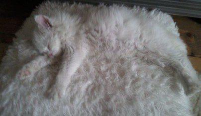 Gatos camuflados14