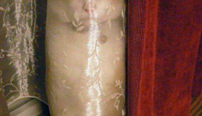 Gatos camuflados17