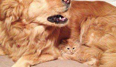 Gatos camuflados18