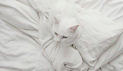 Gatos camuflados20