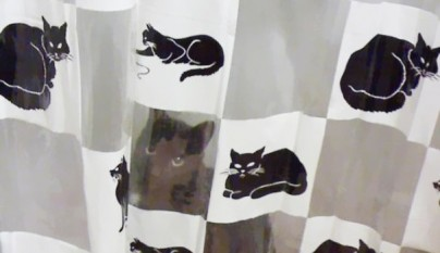 Gatos camuflados23