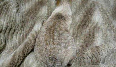 Gatos camuflados24
