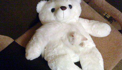 Gatos camuflados3