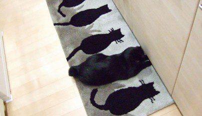 Gatos camuflados4