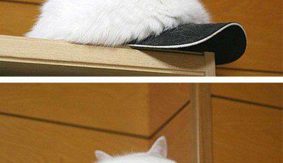 Gatos camuflados5