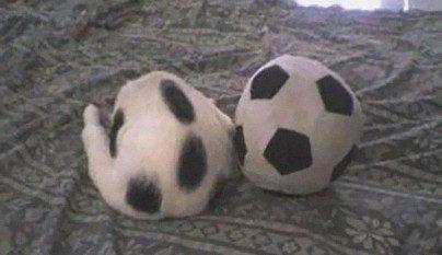 Gatos camuflados7