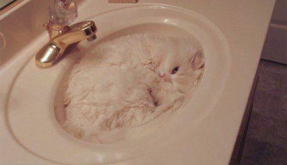 Gatos camuflados8