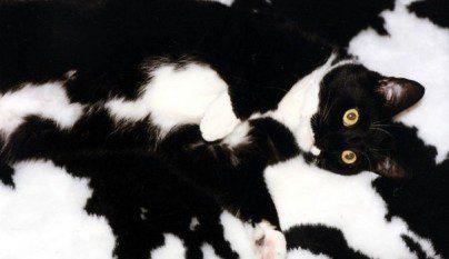 Gatos camuflados9