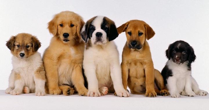 adiestramiento cachorros1