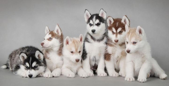 destete cachorros1