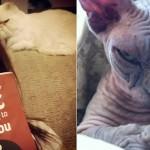 Fotos de gatos que dan mucho miedo