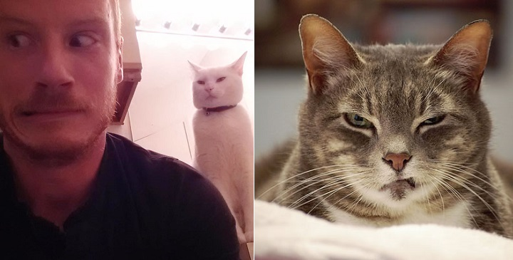 gatos malvados fotos1
