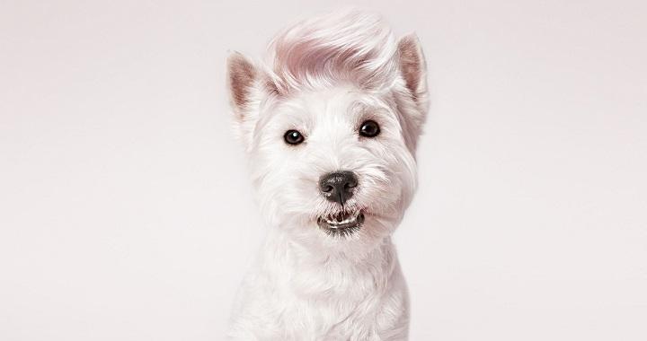 perro actor