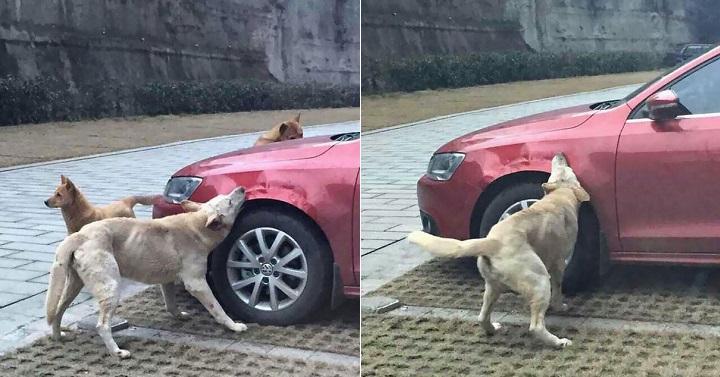 perro vengativo