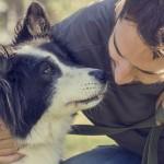 Perros: ¿nos quieren de verdad o su amor es interesado?