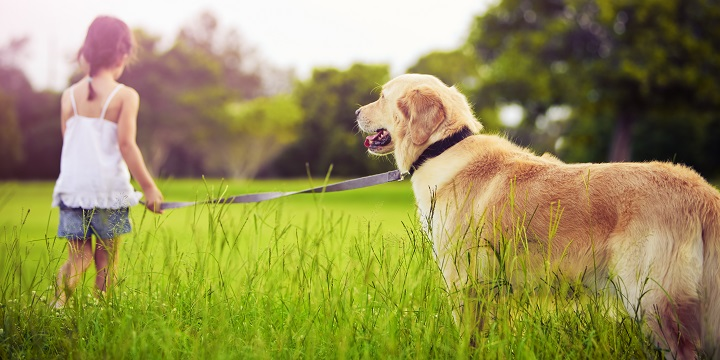 perros amor1