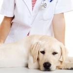 El colesterol alto en perros