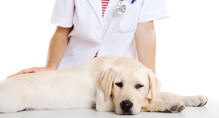 perros colesterol